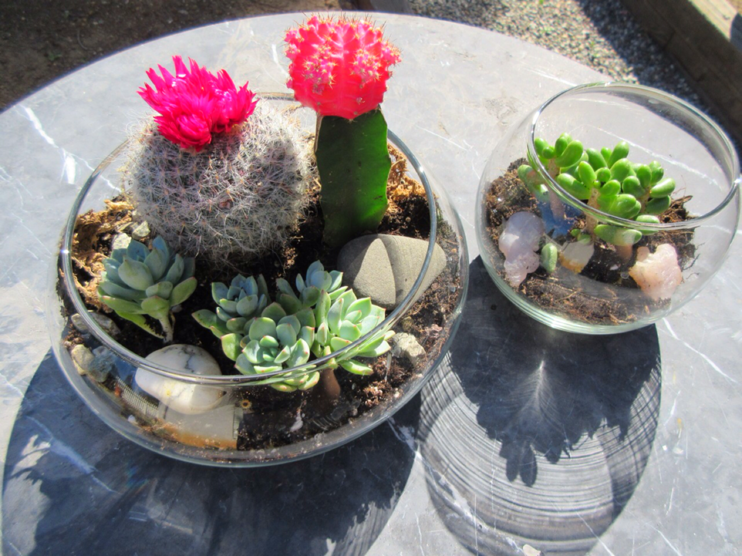 diy succulent terrarium sustainable daisy blog. Black Bedroom Furniture Sets. Home Design Ideas